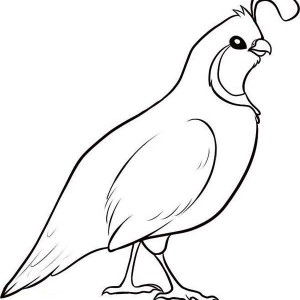 300x300 Awesome Drawing Of Quail Coloring Page Color Luna