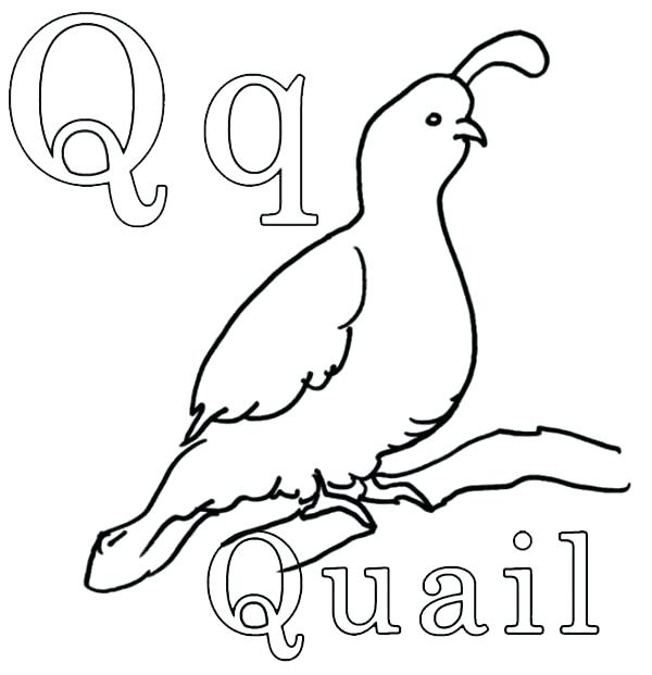 600x621 Quail Coloring Page Salmon Coloring Pages Salmon Coloring Pages