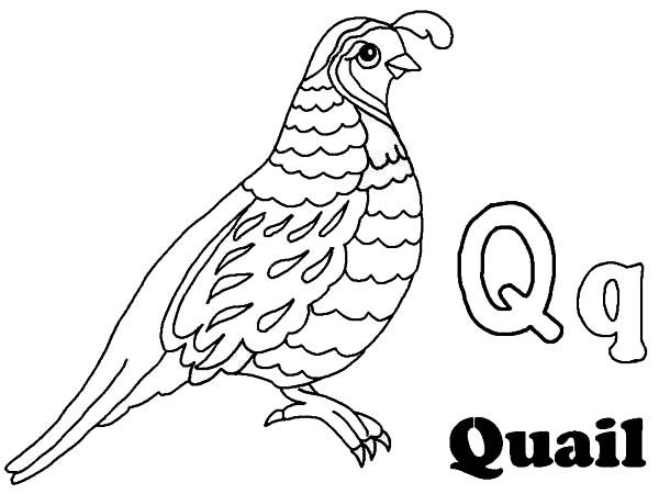 600x450 Quail Coloring Pages For Preschool