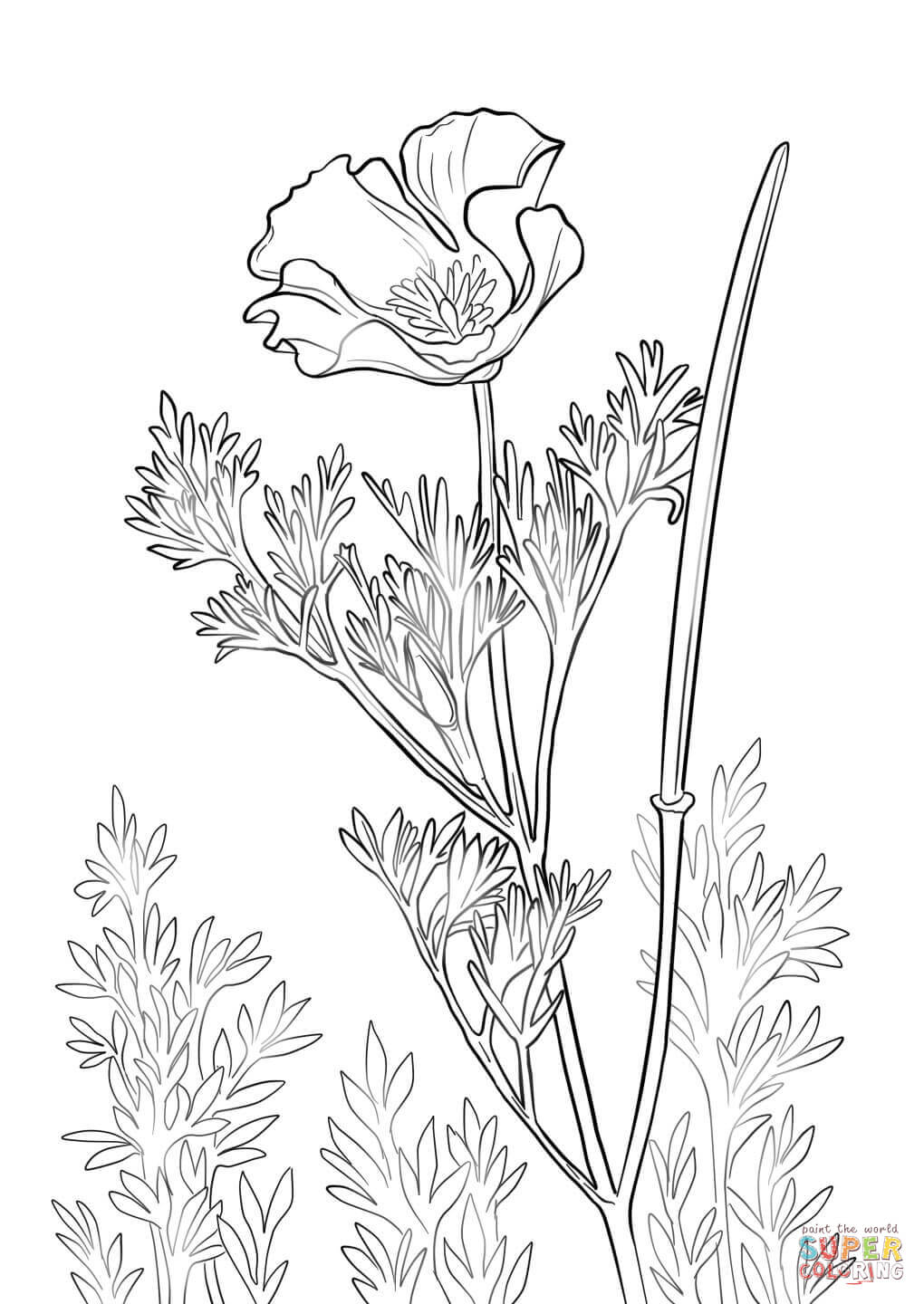 1020x1440 California Poppy Coloring Page Pages