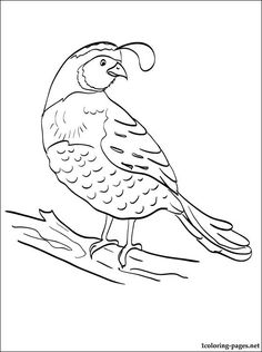 236x316 California Quails Coloring Page {kids Coloring And Work Pages