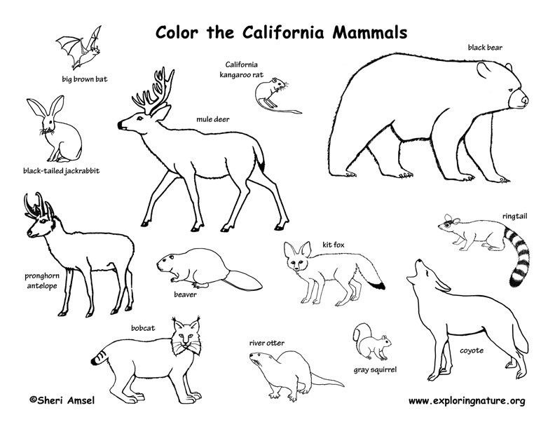 792x612 California State Animal Coloring Page