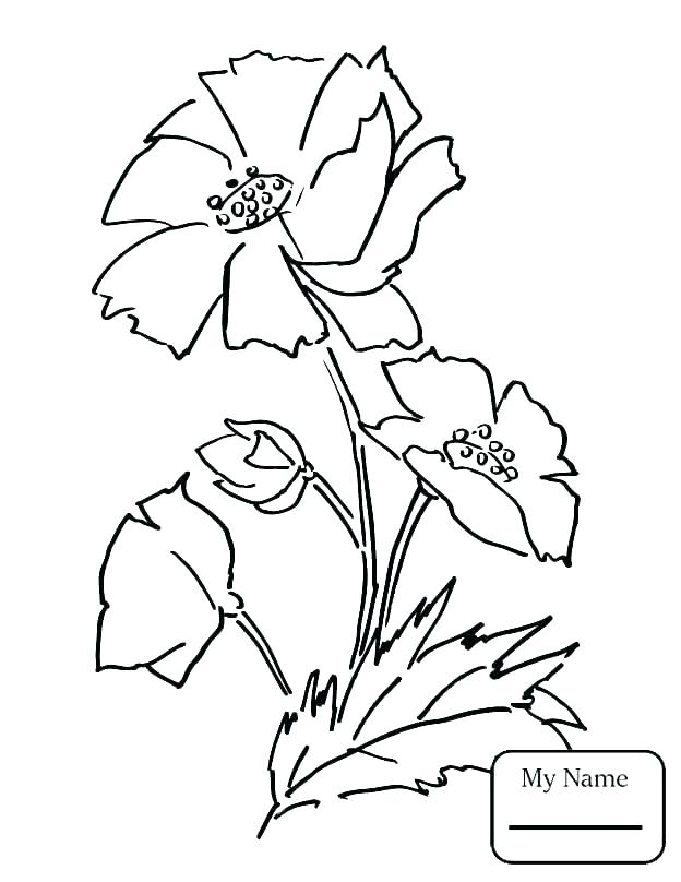 624x808 California State Flower Coloring Page S S S California State