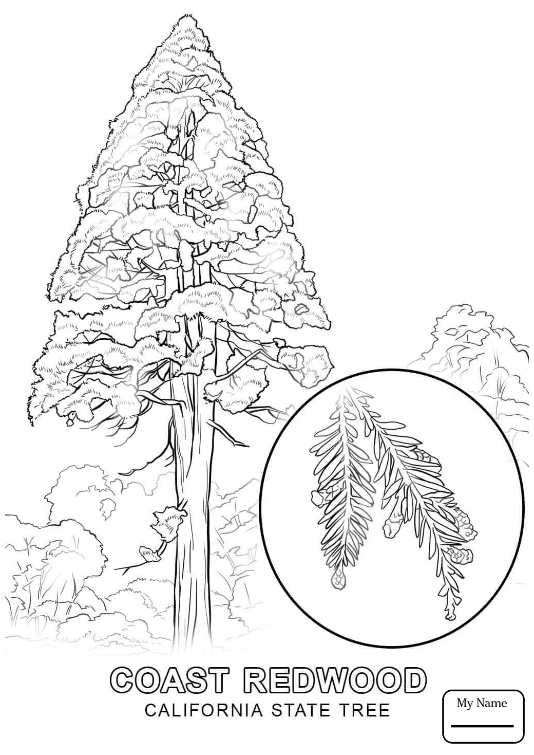 1040x1469 Countries Cultures California State Bird Coloring Pages Inside