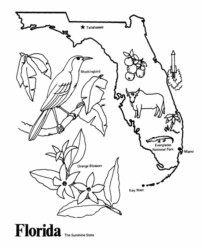 670x820 Florida State Coloring Pages