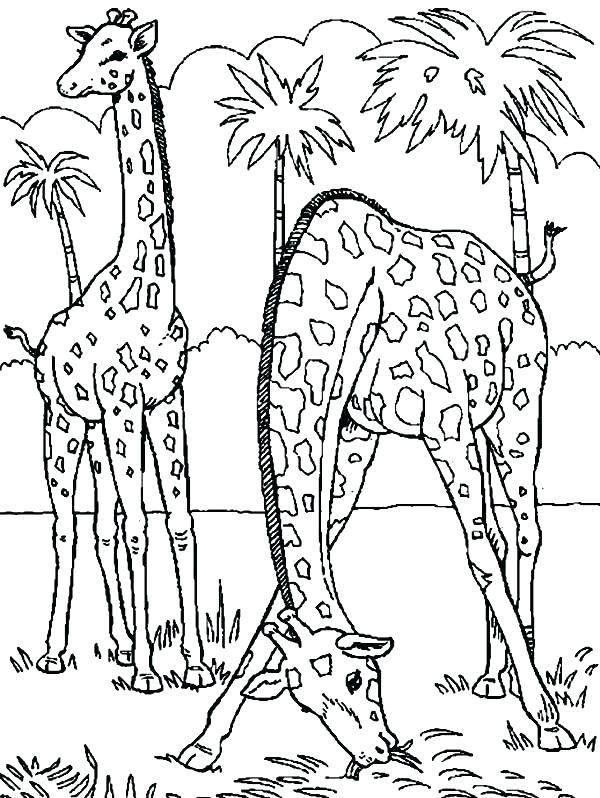 600x798 California Coloring Pages