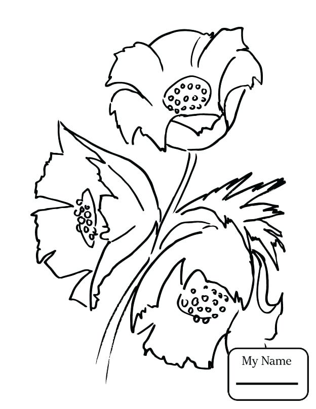624x808 Coloring California State Flower Coloring Page Poppies Poppy