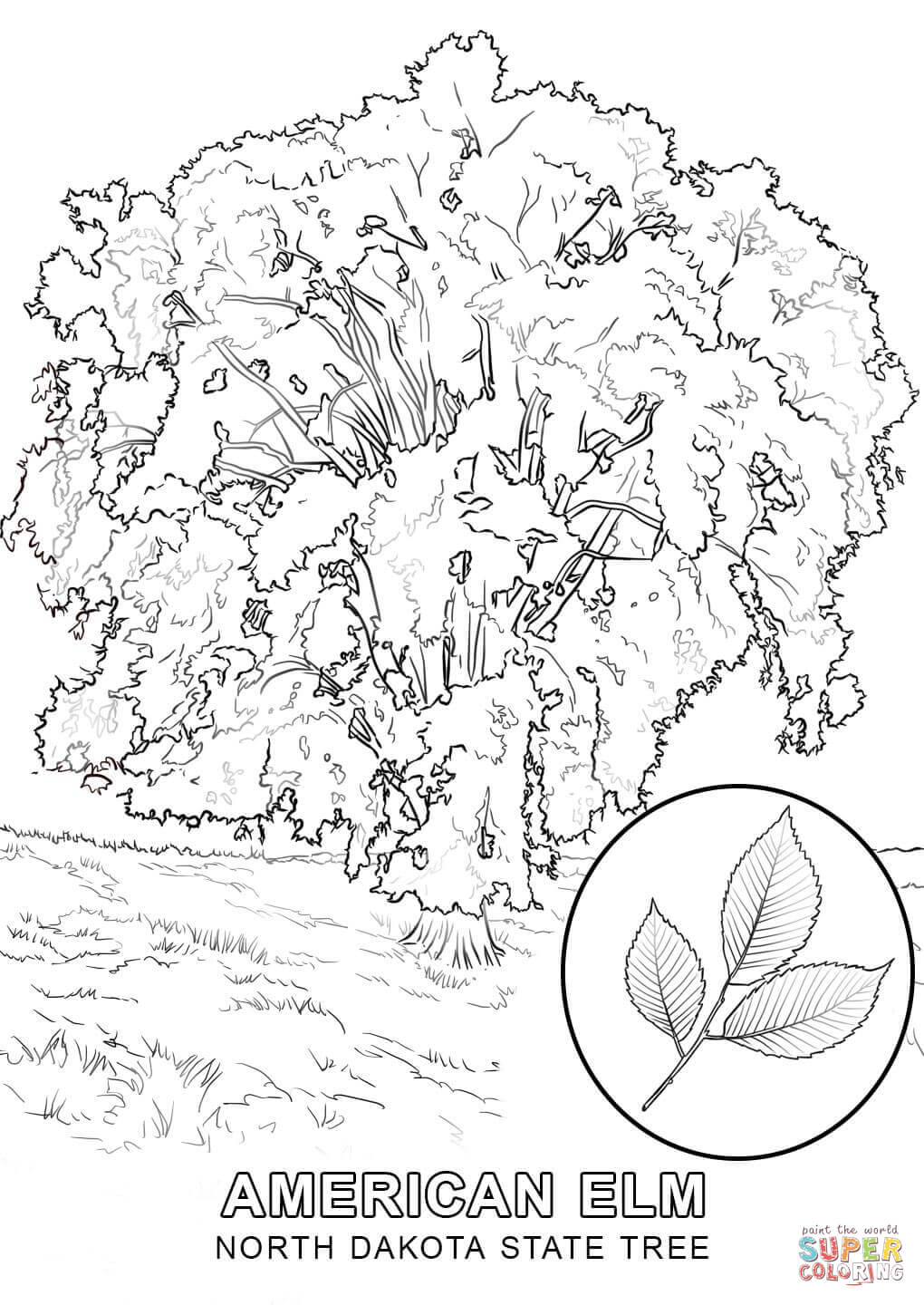 1020x1440 Perspective Hawaii State Tree Coloring Page North Dakota Free