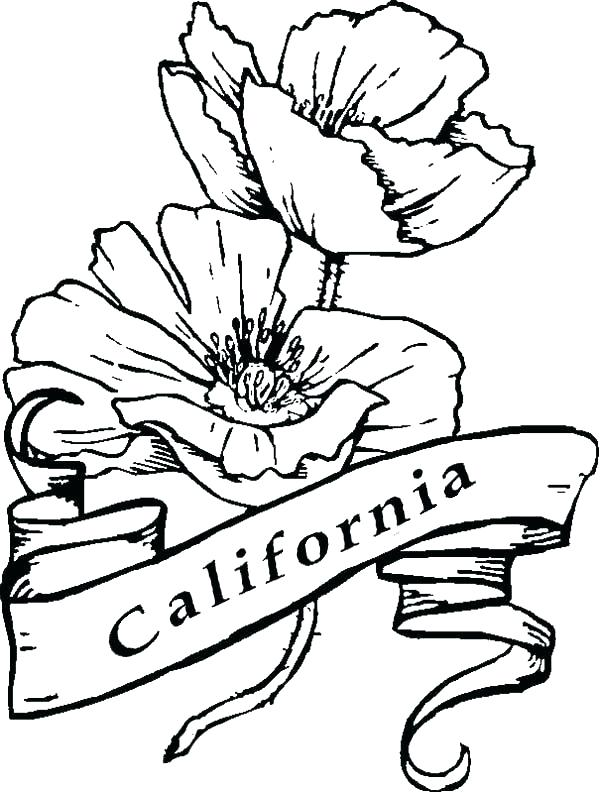 600x793 Coloring California State Flower Coloring Page Click To See