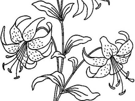 Calla Lily Coloring Pages at GetDrawings.com   Free for personal use ...