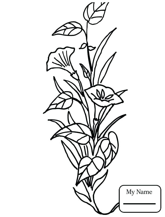 Calla Lily Coloring Pages at GetDrawings.com | Free for personal use ...