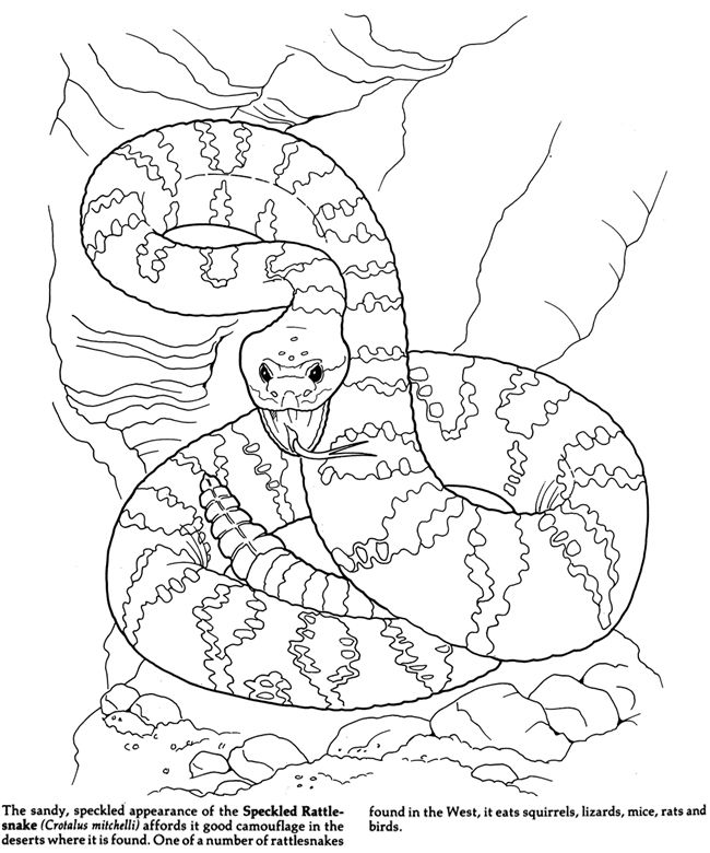 650x780 Desert Coloring Pages For Kids Az Coloring Pages Coloring Pages