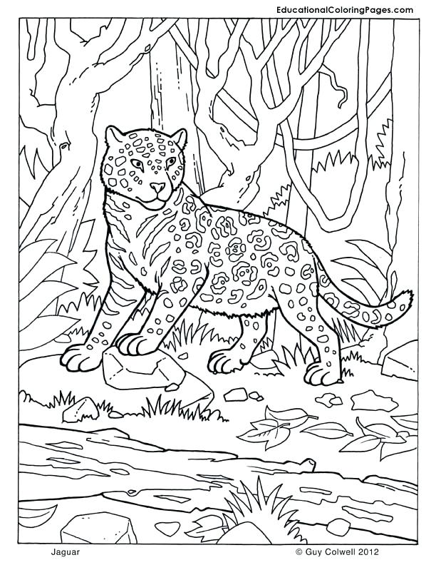 612x792 Camouflage Coloring Pages Images About Coloring Pages On Mammals