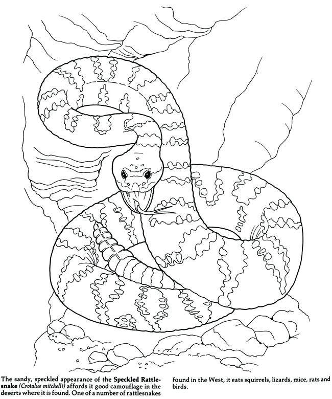 650x780 Coloring Pages Camouflage Animals