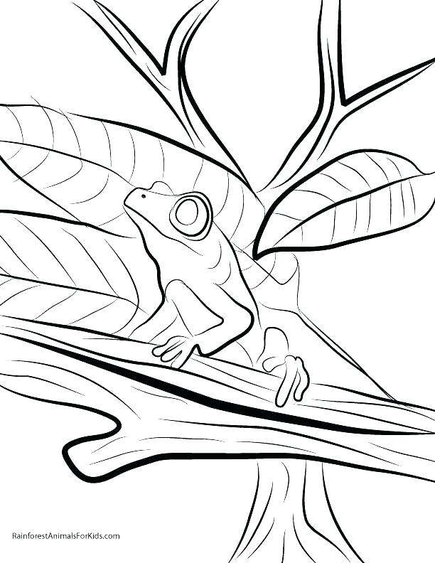 612x792 Endangered Species Coloring Pages Camouflage Coloring Pages