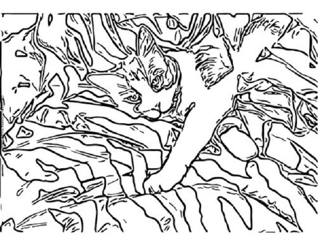 650x501 Camo Pattern Coloring Pages Coloring Pages Camo