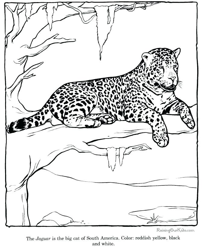 670x820 Sky Leopard Coloring Sheets Free To Print Sky Leopard Coloring