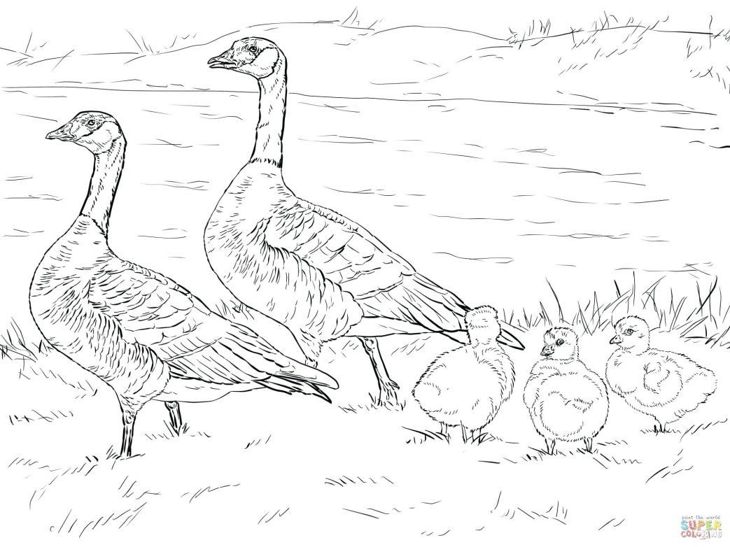 1043x782 Flying Goose Coloring Page Well Hero Pages Canada Stock