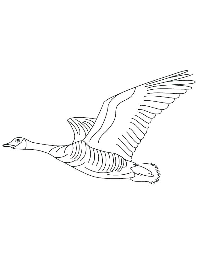 630x810 Goose Coloring Page Goose Animal Coloring Pages Goose Free
