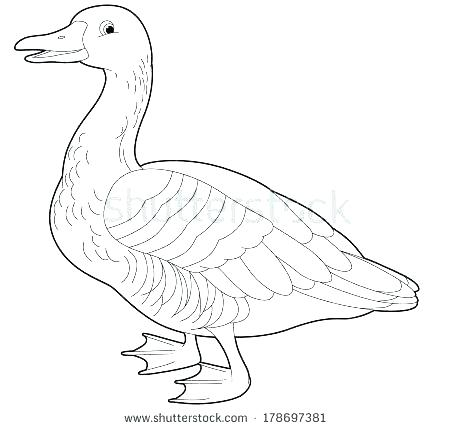 450x429 Goose Coloring Pages Goose Walking Coloring Page Baby Geese