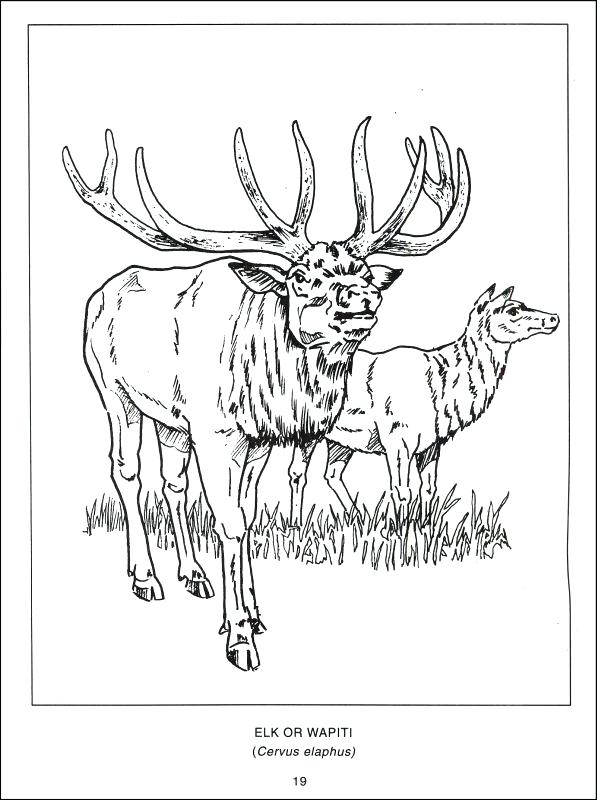 597x800 Canada Coloring Pages Fishing In Coloring Page Canada Geese