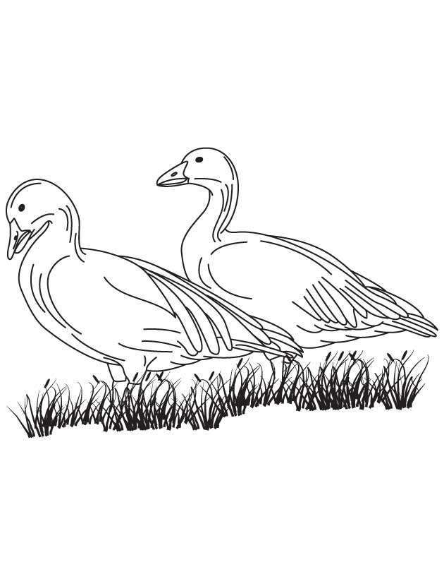 630x810 Canadian Geese Coloring Pages