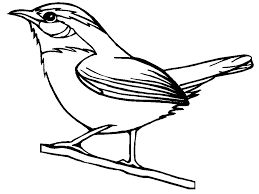 259x194 Best Canary Coloring Pages Images On Children