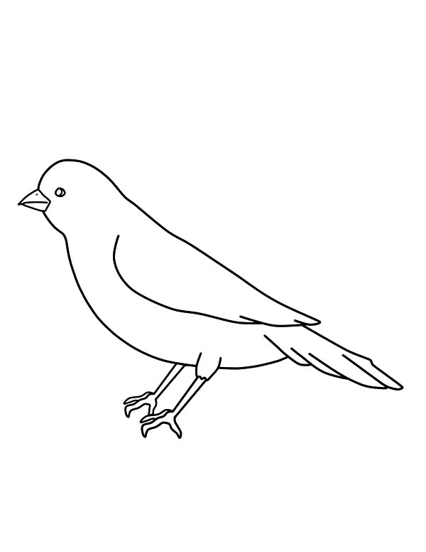 600x776 Canary Bird Outline Coloring Pages Canary Bird Outline Coloring