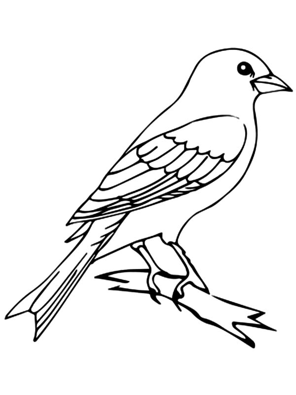 600x799 Canary Bird Perched On Tree Coloring Pages Best Place To Color