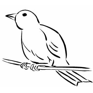 300x300 Canary On Branch Coloring Sheet
