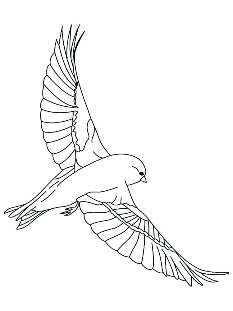 750x1000 Bird Outlines Colouring Pages Canary Outline Coloring Best Place
