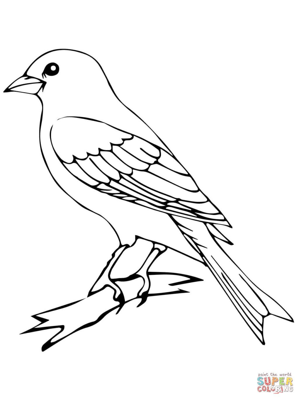 1024x1365 Perched Canary Bird Coloring Page Free Printable Pages X