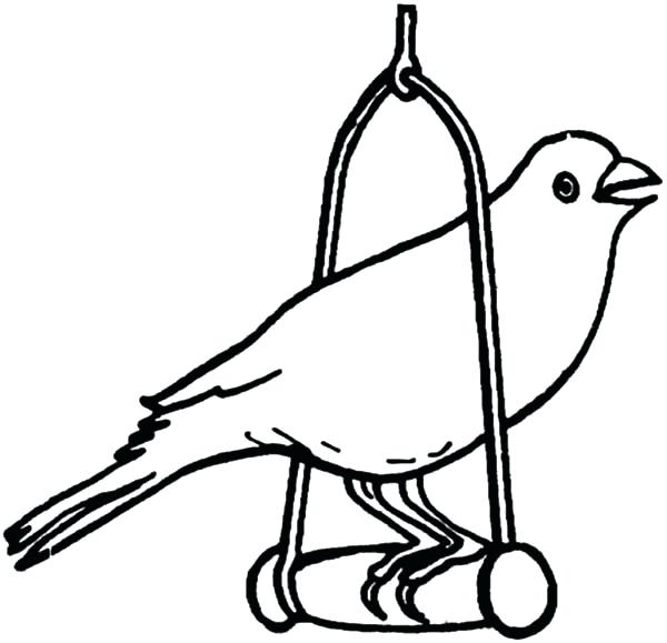 600x579 Pet Coloring Pages Canary Bird Canary Bird Pet Coloring Pages