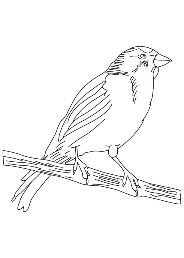 613x860 Small Songbird Coloring Page Download Free Small Songbird