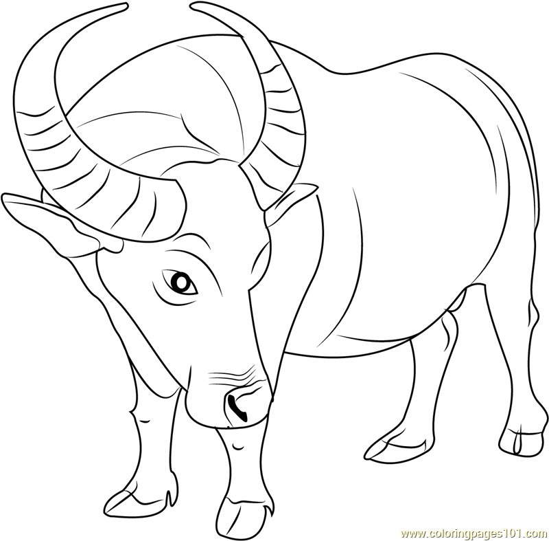 800x787 Buffalo Coloring Pages