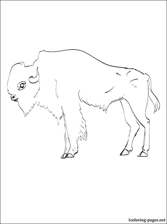 560x750 Buffalo Coloring Pages Mammals Bison With Calve Coloring Pages