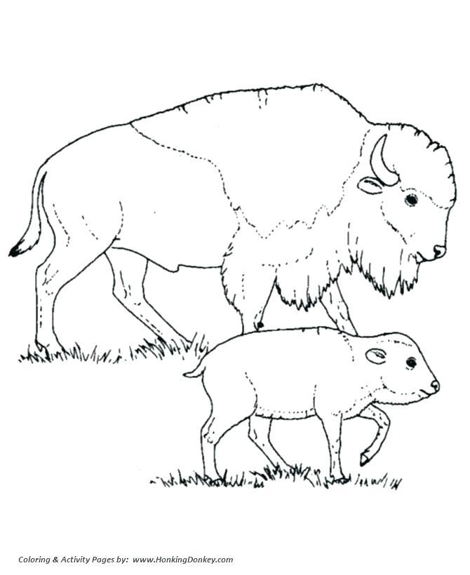 670x820 Buffalo Coloring Pages Milkman Buffalo Coloring Page Cape Buffalo