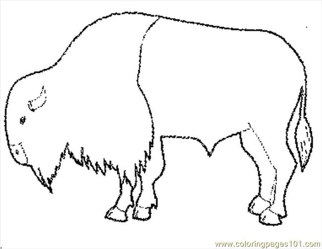 650x503 Bison Coloring Pages