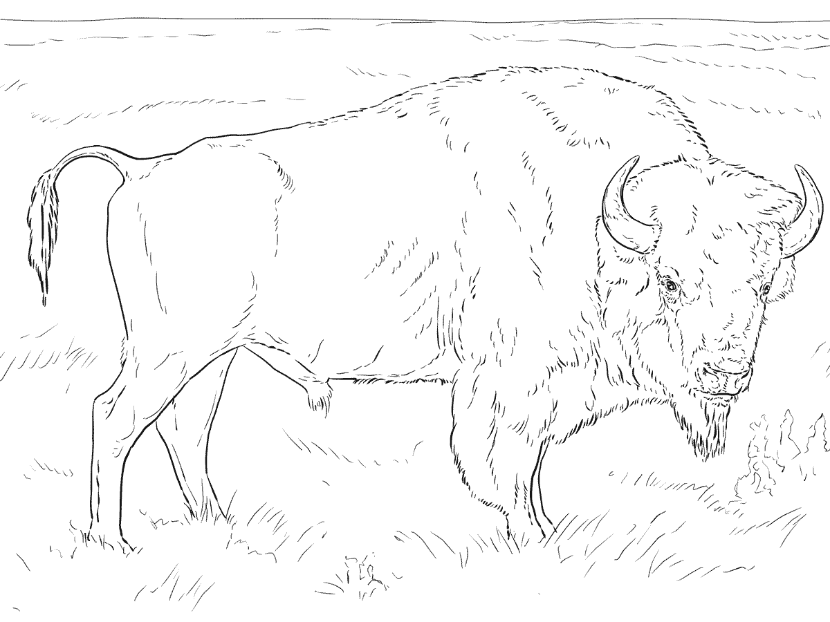 1200x900 Real Heavy Machines Buffalo Coloring Pages Cliparts