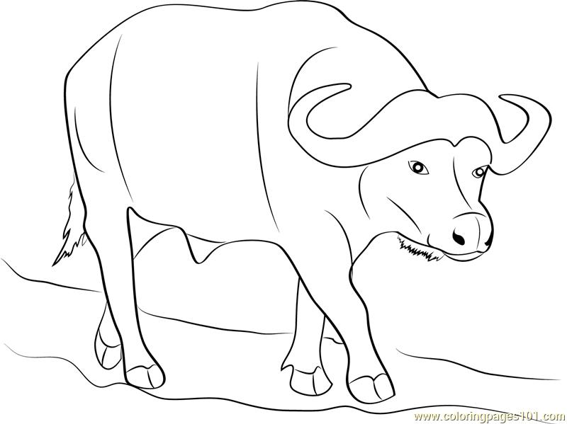 800x599 Wild Buffalo Coloring Page