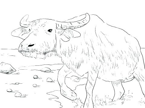 480x360 Buffalo Coloring Page Bills Coloring Pages Printable Coloring