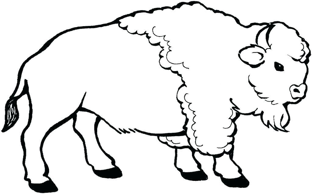 1024x636 Buffalo Coloring Page Buffalo Coloring Page Download Large Image