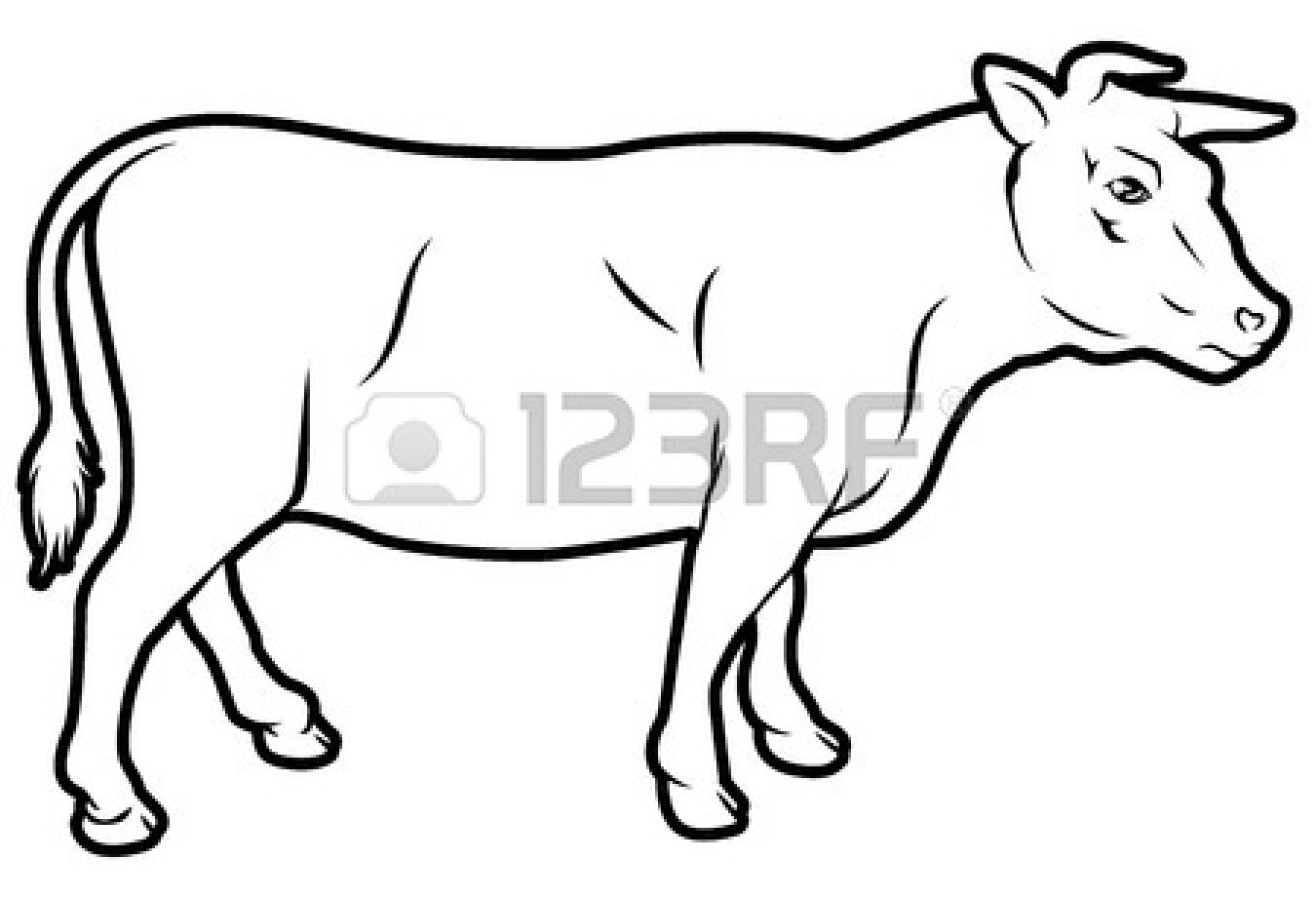 1350x921 Beef Cow Drawing