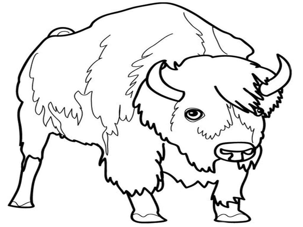 1024x768 Bison Coloring Pages Coloring Pages Kids