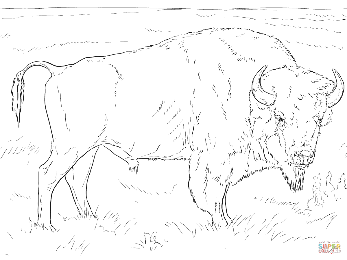 1200x900 Buffalo Coloring Page Pages Free