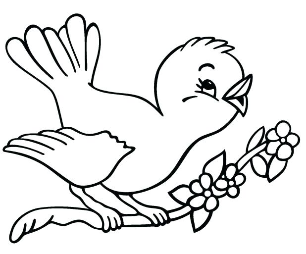618x513 Cardinal Bird Coloring Page Winter Birds Coloring Pages Page Free