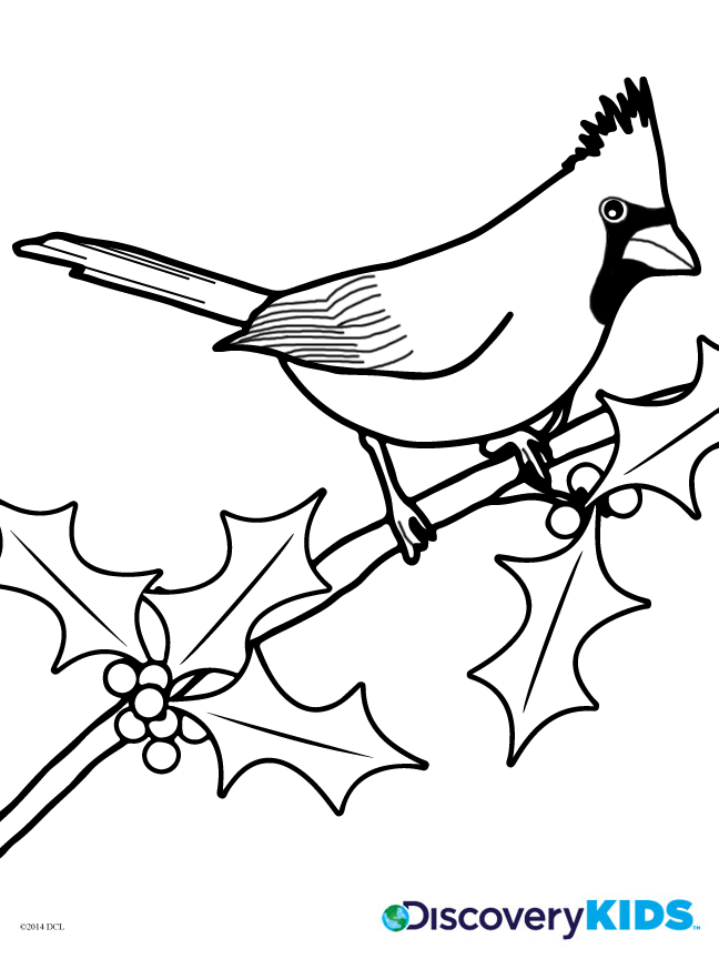 648x864 Cardinal Coloring Page