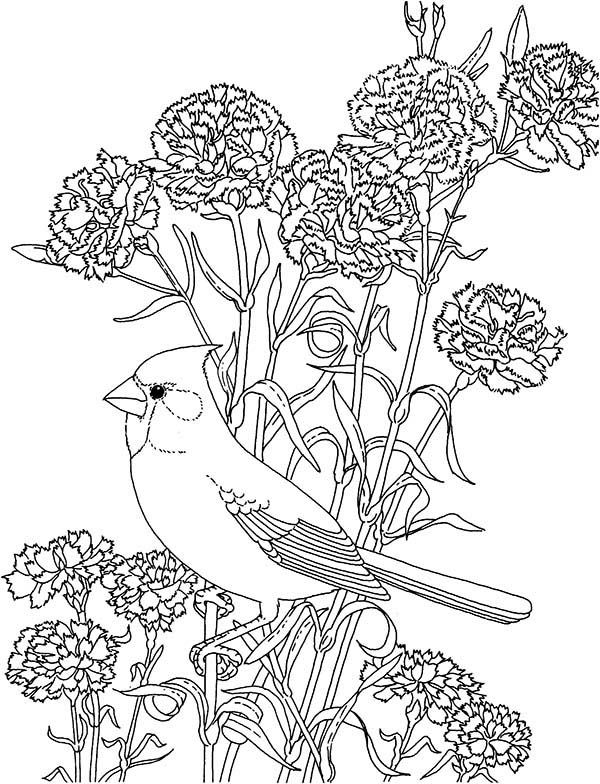 600x784 Carnation Flower, Carnation Flower And Cardinal Bird Coloring