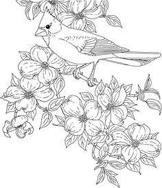 236x274 Free Printable Coloring Page North Carolina State Bird