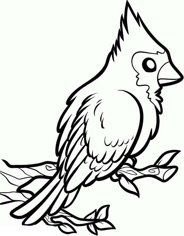 600x766 How To Draw A Red Cardinal Bird Coloring Page Coloring Sun